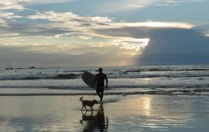 Hut_surfing-dog